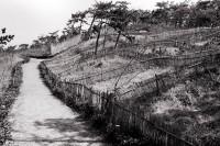 防砂林 1980